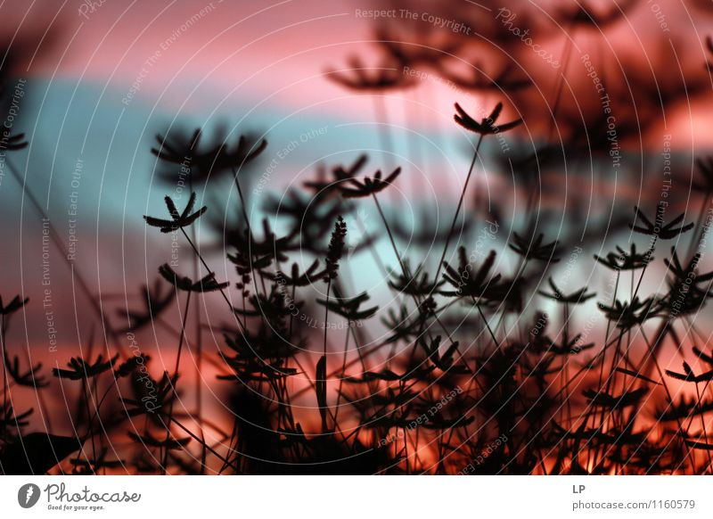 Fuzzy Natur blau Pflanze schön Ferne dunkel schwarz Wärme Blüte natürlich rosa Horizont liegen Zufriedenheit Sträucher einfach