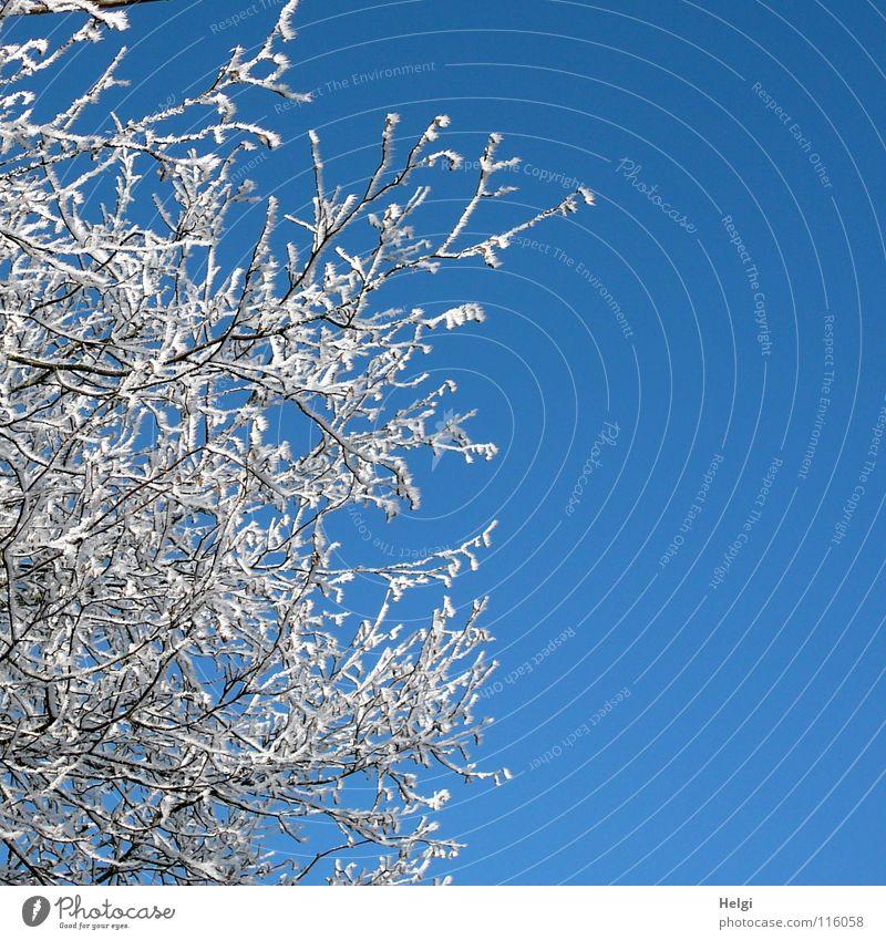 rauh, reif und zackig.... Winter frieren gefroren Raureif kalt Wintertag Baum lang dünn emporragend Eiskristall Zacken Schönes Wetter Baumkrone Geäst weiß