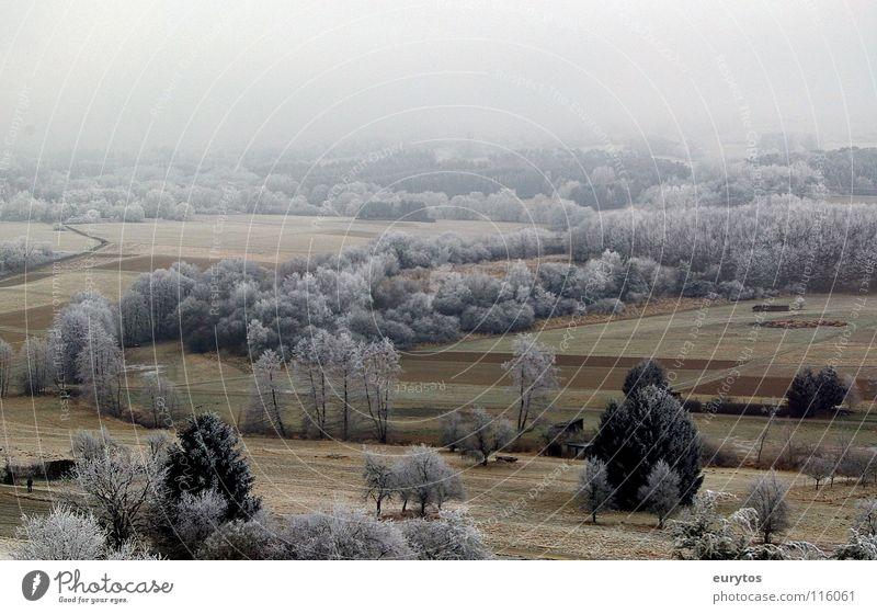 Puderzucker ?! Winter kalt Raureif gefroren Wiese Feld Baum Panorama (Aussicht) Nebel weiß Sträucher Schnee Frost Weide Landschaft Ferne Amerika Tal