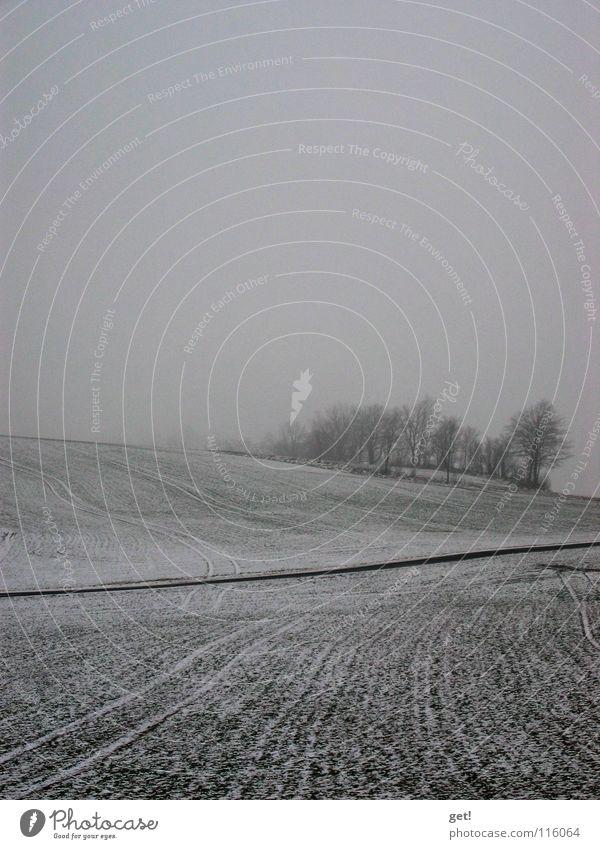 grEy grau Nebel Baum Trauer schwarz weiß Winter Natur Traurigkeit
