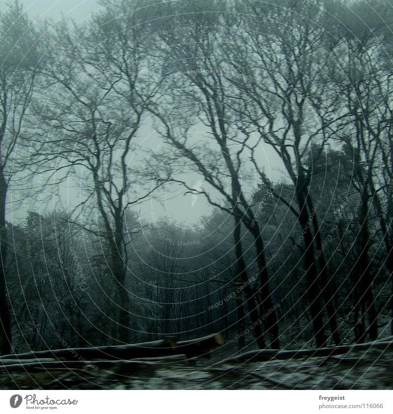 99 Moments Natur Baum Winter Wald dunkel kalt Ast geheimnisvoll