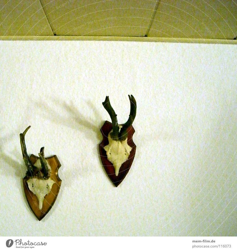 Rehe auf Lichtung II Hirsche Horn braun Ekel Skelett Tier Trophäe Paddel Brunft Jäger Stubenschmuck Umwelt Tierschutz Dekoration & Verzierung Säugetier