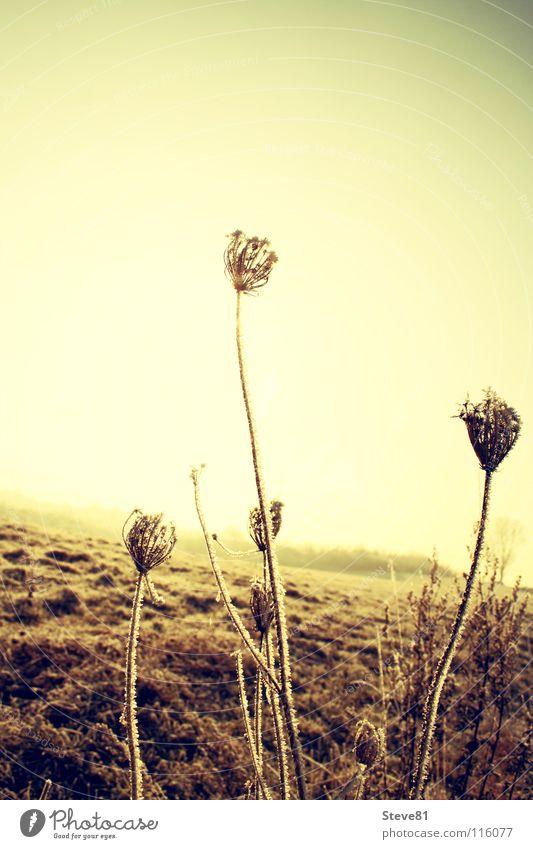 too lost Blume Winter Leben kalt Wiese Tod Feld getrocknet