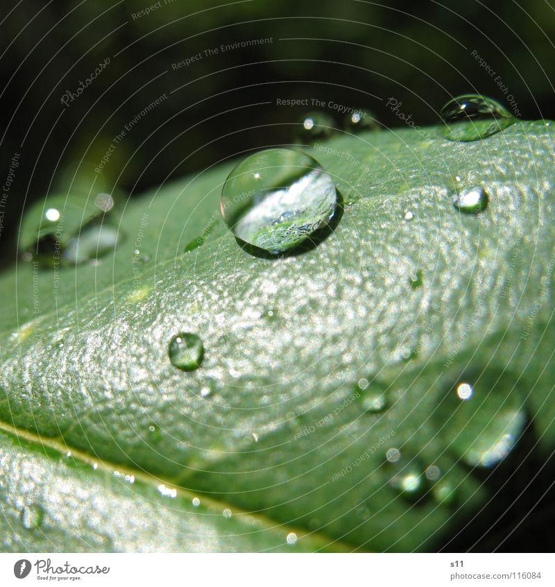 Wasserperle Wassertropfen grün Licht Makroaufnahme Nahaufnahme Kraft Konzentration Lupe
