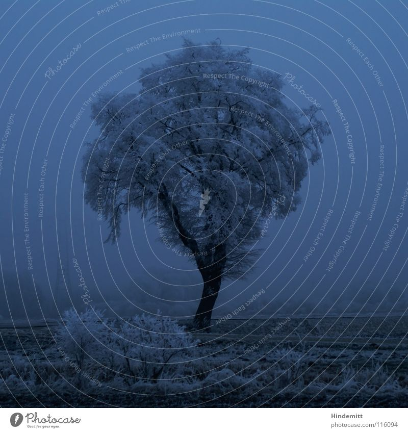 Treestesse weiß Baum blau Pflanze Winter schwarz Einsamkeit Straße kalt dunkel Schnee Traurigkeit Stimmung Eis Feld Nebel