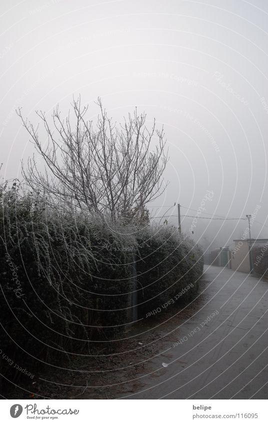 Der Weg weiß Baum Winter Einsamkeit Wege & Pfade Nebel Frost Ast Köln Bürgersteig Hecke unklar Raureif Schrebergarten Maschendrahtzaun