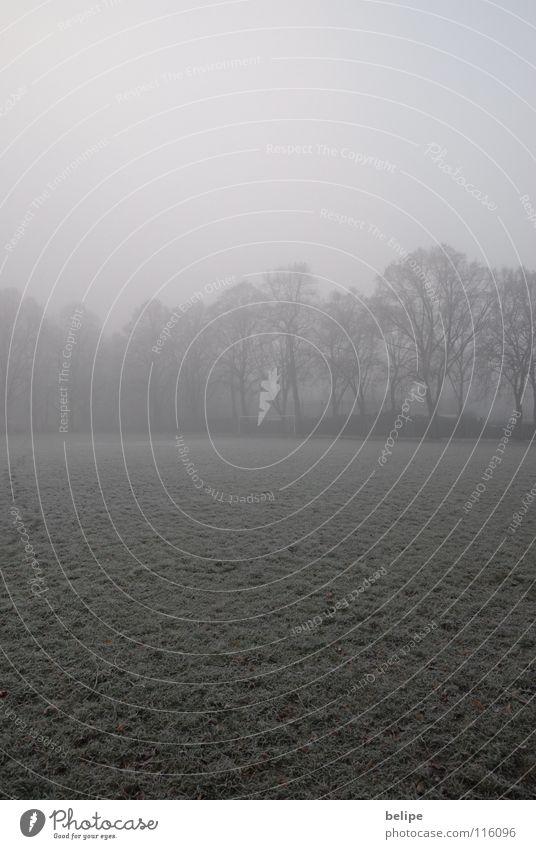 Heute kein Fußball. weiß Baum Winter Einsamkeit kalt Schnee Nebel leer Frost Ast Vergänglichkeit Tor Raureif Fußballplatz Ballsport