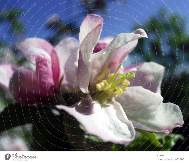 summer Sommer Blüte Natur Sonne