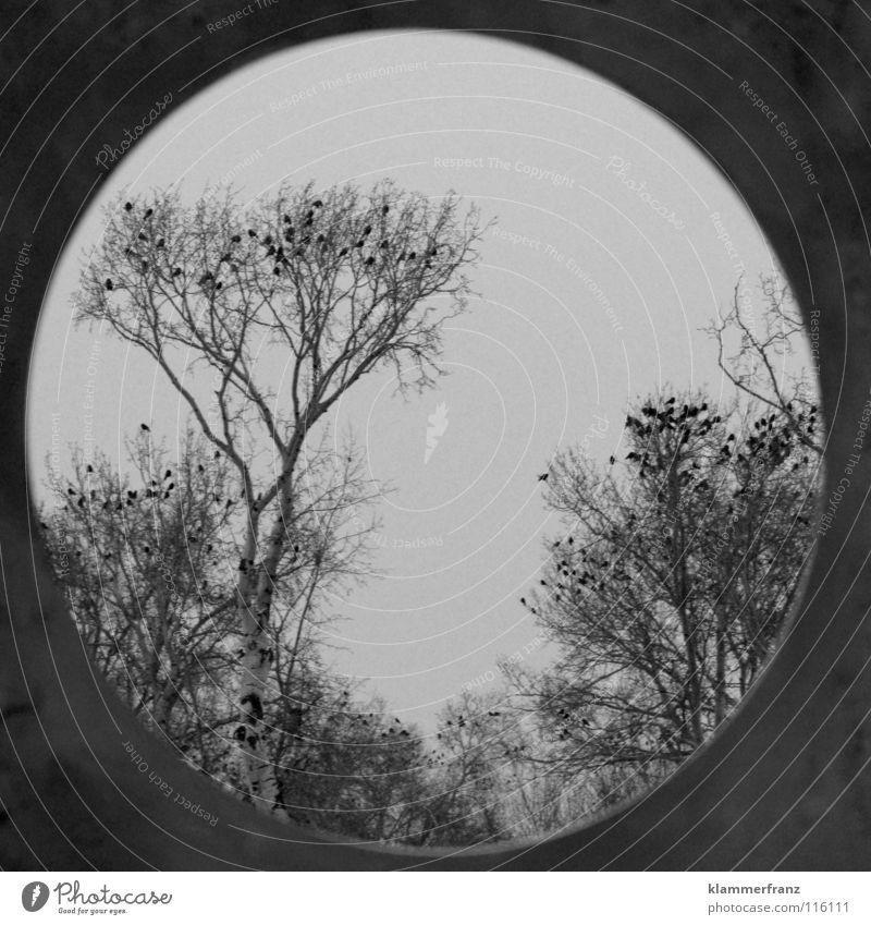 Rundes Bild vom Rabenbaum Kobra Rabenvögel Baum Wald Blatt Laubbaum Krähe Winter kalt gefroren erfrieren Park Gemälde Wolken grau schwarz weiß Am Rand Sträucher