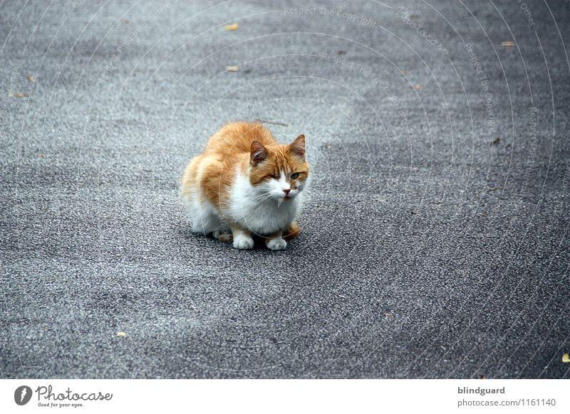 Sit and wait Katze weiß Tier schwarz Straße braun grau trist authentisch beobachten bedrohlich Neugier Haustier Jagd Langeweile Tiergesicht