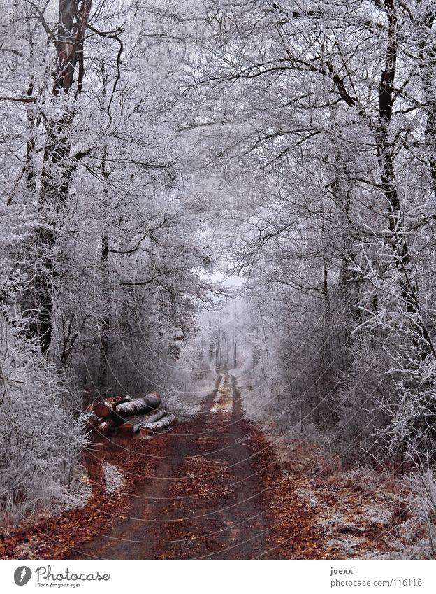 Weißer Wald Baumstamm braun Eis Eiskristall Forstweg geradeaus grau kalt Blatt Puderzucker Spuren Fußweg weiß Winter Schneelandschaft Winterwald Ast Frost Linie