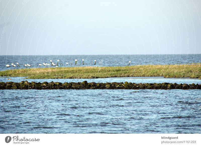 An der Nordseeküste Natur Ferien & Urlaub & Reisen Pflanze blau Sommer grün Wasser weiß Landschaft ruhig Ferne schwarz Küste Freiheit grau Tourismus