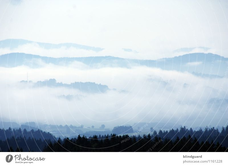 The Fog Ferien & Urlaub & Reisen Tourismus Abenteuer Ferne Freiheit Sommer Berge u. Gebirge Umwelt Natur Landschaft Wetter Hügel blau schwarz weiß Waldboden