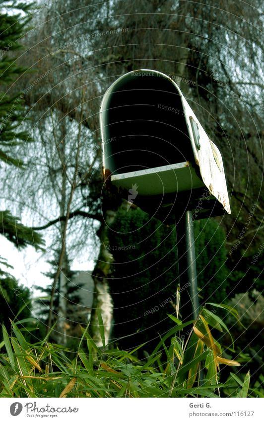 Yvonne ihr seine Mailbox Natur alt Baum grün Blatt Wald dunkel Kommunizieren offen Information Werbung Postkarte verfallen Dienstleistungsgewerbe Kasten Rost