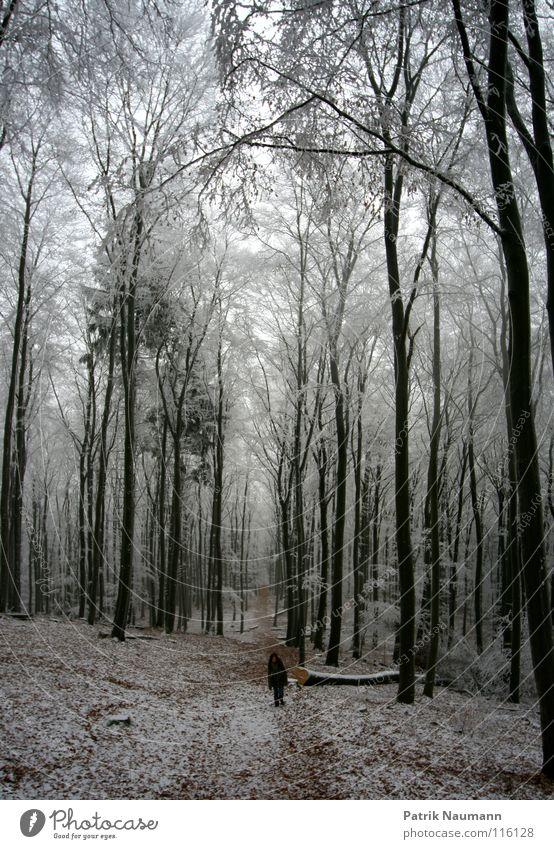 walking in a winterwonderland Baum Winter Einsamkeit Wald Landschaft kalt Schnee Denken Luft Eis laufen Frost Spaziergang Trauer gefroren Wut