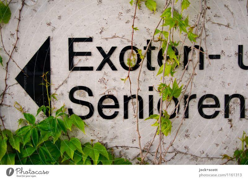 für Exoten und Senioren grün Wand Senior lustig Mauer grau außergewöhnlich Schilder & Markierungen Beginn Beton einzigartig Wandel & Veränderung planen Neugier Ziel Netzwerk