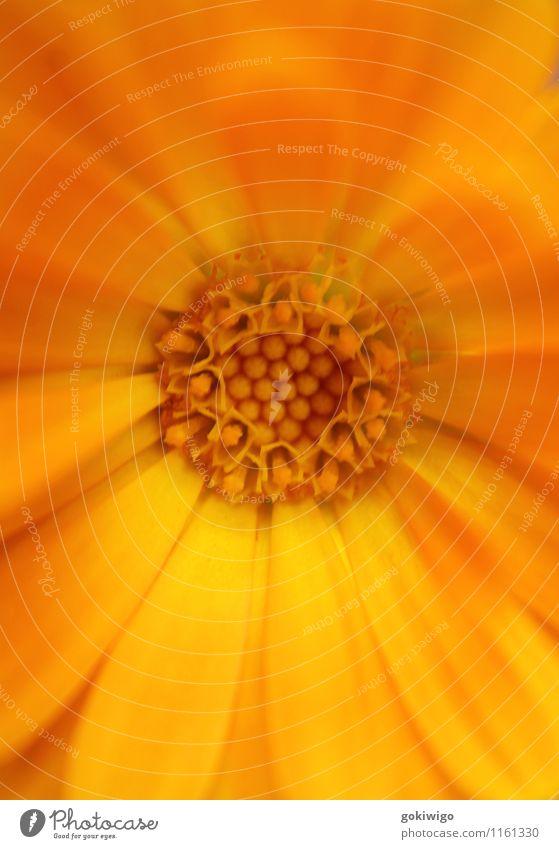 Natur Pflanze ruhig Leben Blüte Wachstum