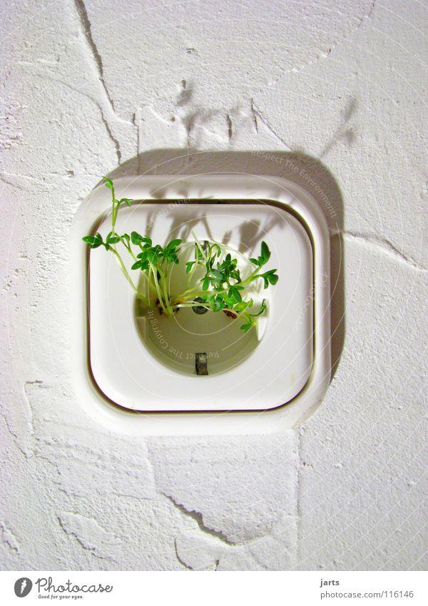 ÖkoStrom ökologisch Erneuerbare Energie Elektrizität Klimaschutz Umweltschutz grün biologisch Kresse alternativ Energiewirtschaft Sauberkeit umweltfreundlich