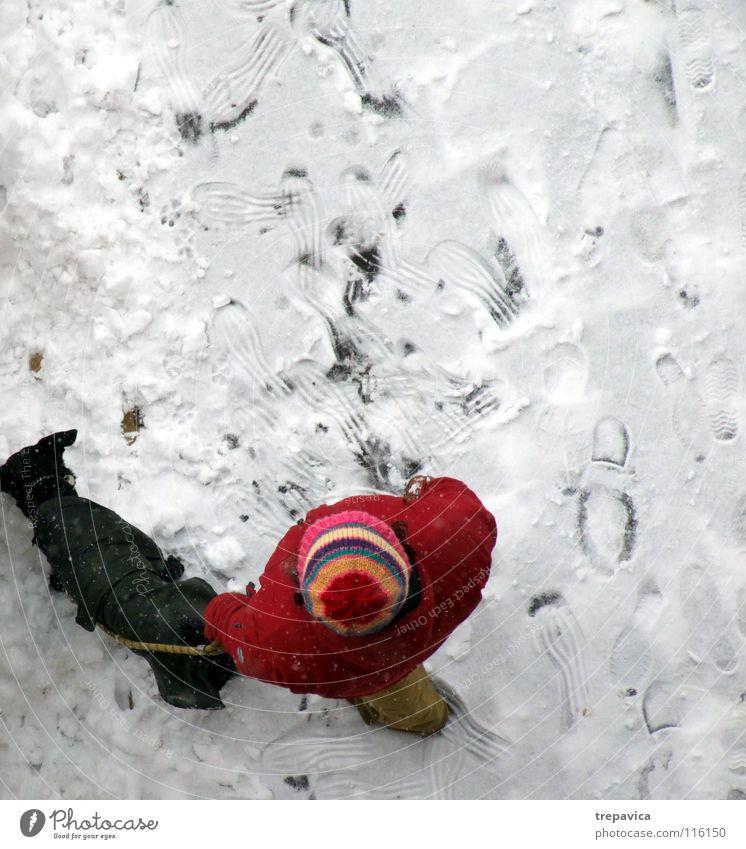 frau und hund II Reihe Winter Hund weiß kalt rot schwarz Dezember Tier Haustier 2 Freundschaft Spaziergang gebunden angekettet Zusammensein Partnerschaft