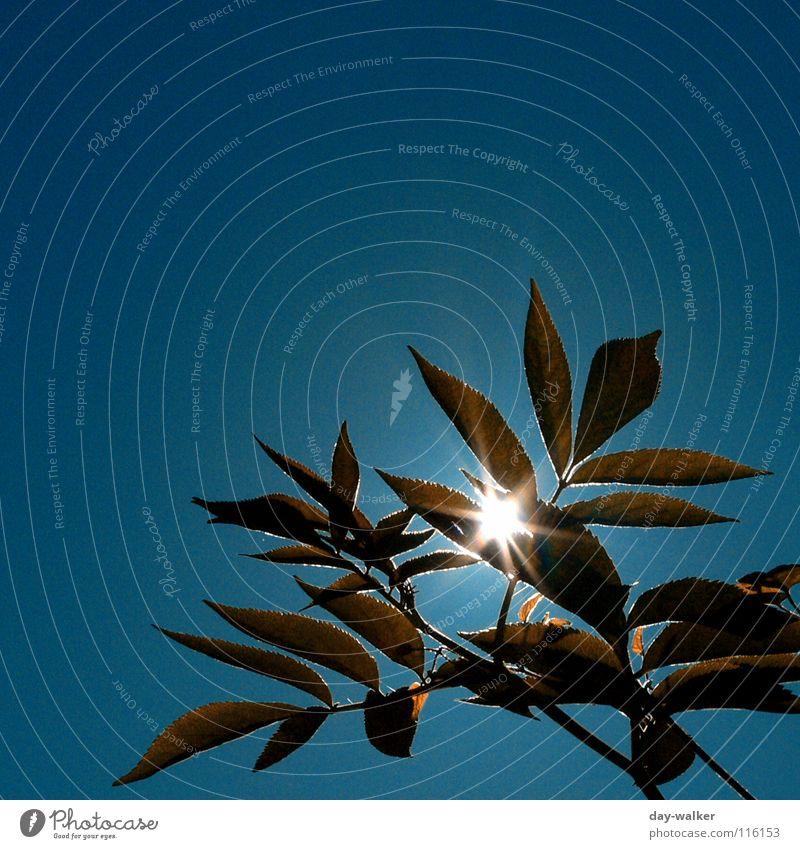 Summerfeelings Sommer Blatt Pflanze Wohlgefühl grün blenden braun rot Sonne Beleuchtung blau Wärme Ast Natur Schatten