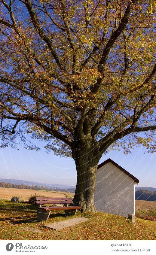 Witwe Müller Natur alt Baum ruhig Blatt Erholung kalt Herbst Berge u. Gebirge Stimmung Denken Wärme Religion & Glaube Bank Physik Frieden
