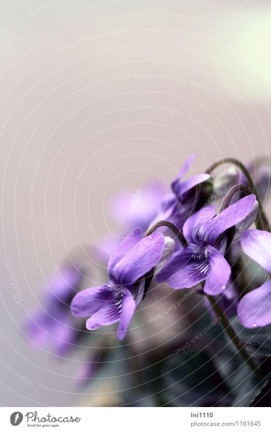 Wetter | grau/lila Himmel Natur Pflanze blau schön grün weiß Blume schwarz Umwelt Blüte Frühling natürlich Gesundheit außergewöhnlich
