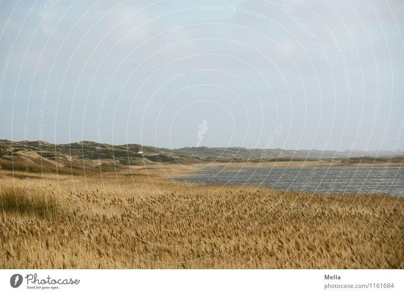1100 | Aussichtsreich Umwelt Natur Landschaft Gras Schilfrohr Hügel Küste Seeufer Nordsee Düne frei Unendlichkeit natürlich Einsamkeit Erholung Freiheit Idylle