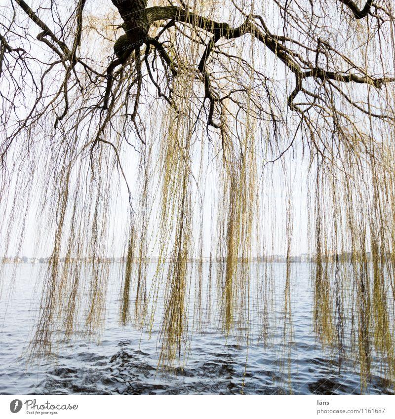Alster-Gardine Natur Wasser Baum Park Idylle Neugier Seeufer Flussufer Weide Alster
