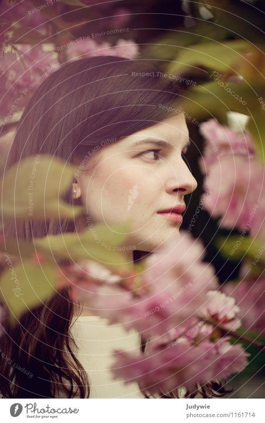 Scheu schön Mensch feminin Junge Frau Jugendliche Erwachsene 13-18 Jahre Kind 18-30 Jahre Umwelt Natur Frühling Pflanze Blüte Kirschbaum Kirschblüten Garten