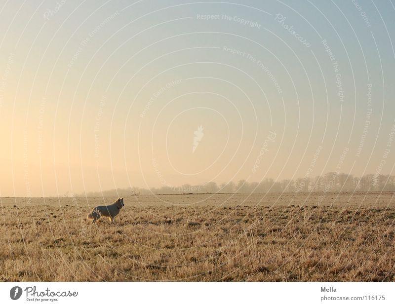 Kalter Hund Tier Feld Wiese kalt Morgen Winter Eis Klirren frieren Luft Ferne stehen Einsamkeit verloren rosa weiß Gras gehen Spaziergang Romantik laufen flach