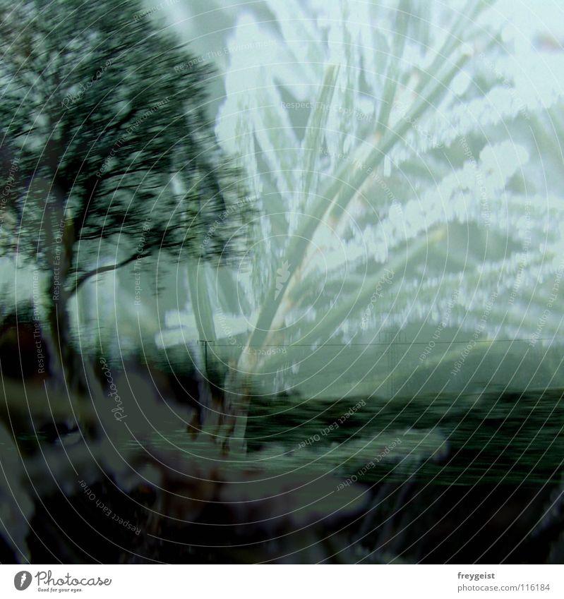100 Moments Caught Baum Winter kalt träumen Eis geheimnisvoll gefroren Surrealismus mystisch Schnellzug Märchen Doppelbelichtung Tannenzweig