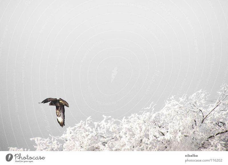 Freiflug Farbfoto Gedeckte Farben Außenaufnahme Menschenleer Textfreiraum oben Morgen Natur Landschaft Luft Himmel Wolken Winter Schnee Baum Tier Wildtier Vogel