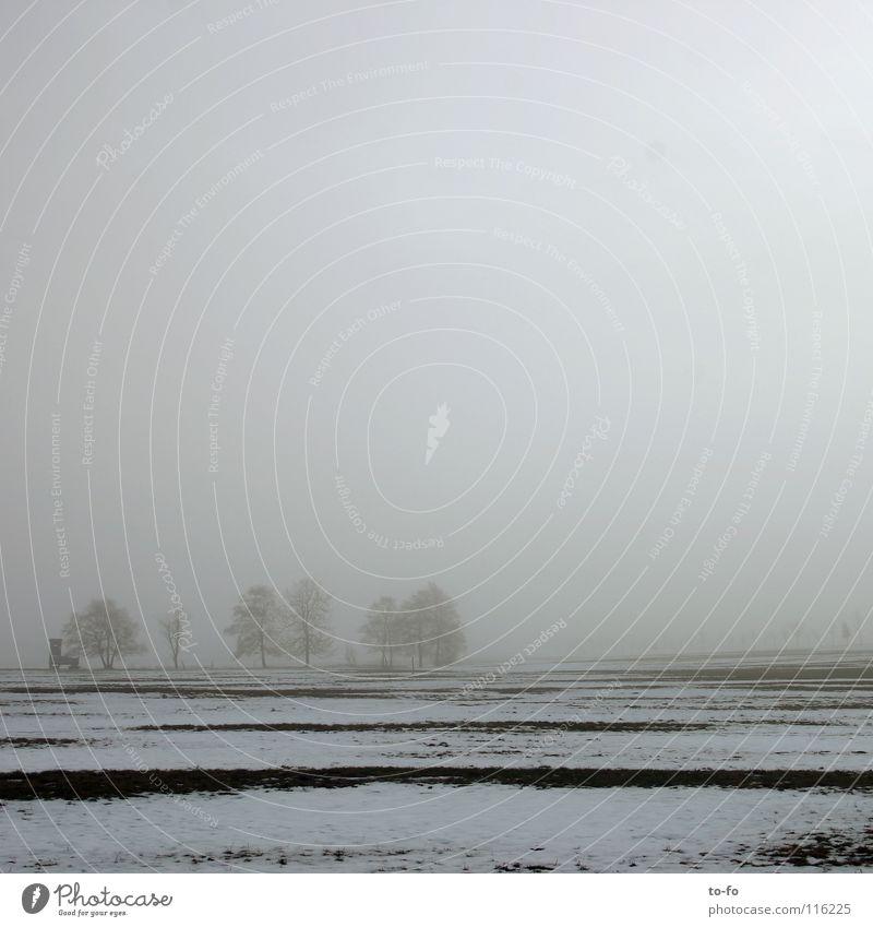 November 2 Nebel grau trist Herbst Feld kalt Einsamkeit Winter Wege & Pfade Schnee ruhig