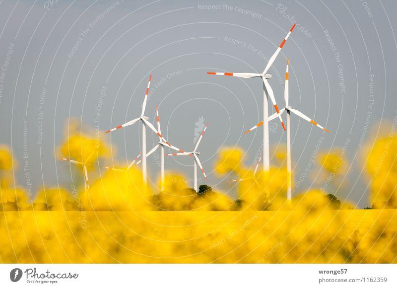 Erneuerbare Energien Energiewirtschaft Windkraftanlage Umwelt Pflanze Wolkenloser Himmel Horizont Sommer Blüte Nutzpflanze Raps Rapsfeld Rapsblüte Feld dunkel