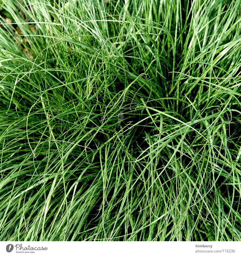 wiesencase Natur grün Pflanze Tier Wiese Gras Garten Park Feld Wachstum Bodenbelag Landwirtschaft Amerika Halm