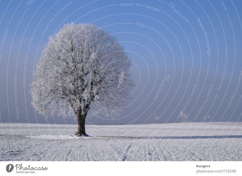 Mein Lieblingsbaum im Winter Baum Laubbaum Raureif weiß kalt Feld Wiese Schnee Nebel grau Horizont ruhig Einsamkeit einzeln Außenaufnahme Himmel blau Klarheit