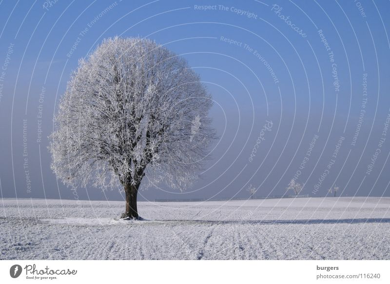 Mein Lieblingsbaum im Winter Himmel weiß Baum blau ruhig Einsamkeit kalt Schnee Wiese grau Landschaft Feld Nebel Horizont Klarheit