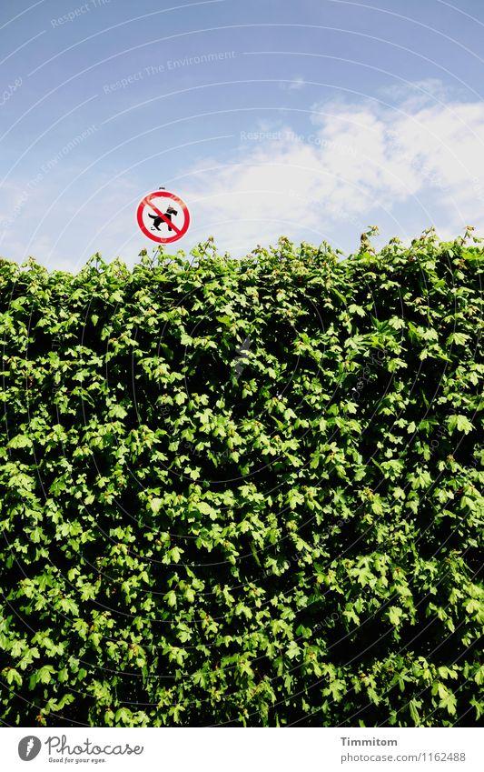 Für Flughunde! Umwelt Himmel Wolken Frühling Schönes Wetter Baum Park Schilder & Markierungen Fröhlichkeit blau grün weiß Gefühle Verbote Hecke Warnung Farbfoto
