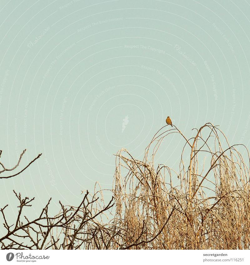 sei immer gut zu vögeln. Vogel Baum laublos Winter Herbst hocken hockend Raum schlechtes Wetter ruhig Erholung Trauer Langeweile Pause gefährlich Birke
