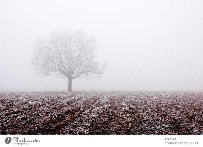 Nebelbaum Baum Feld Landwirtschaft Raureif ruhig Winter Natur Wintre Frost Eis Schnee