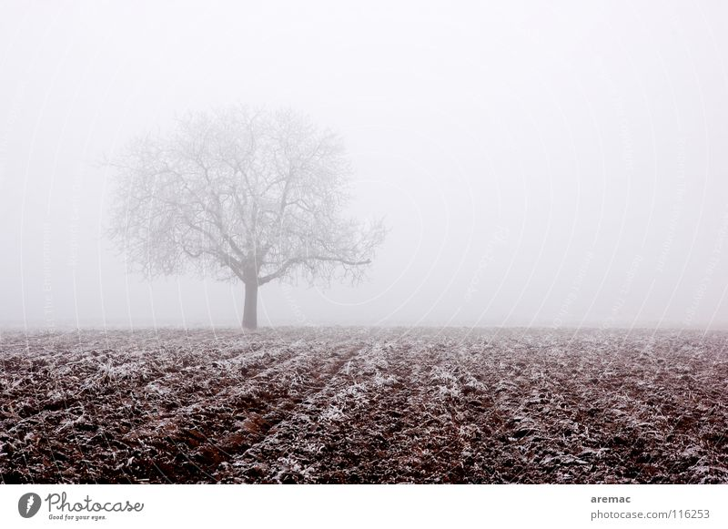 Nebelbaum Natur Baum Winter ruhig Schnee Eis Feld Frost Landwirtschaft Raureif