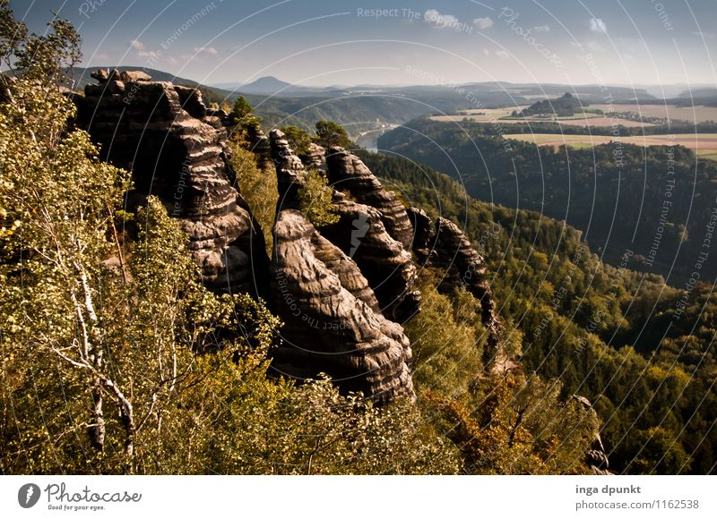 Seitlich der Elbe Natur Pflanze schön Sommer Baum Landschaft Wald Umwelt Berge u. Gebirge natürlich Deutschland Felsen Tourismus Schönes Wetter Urelemente Hügel