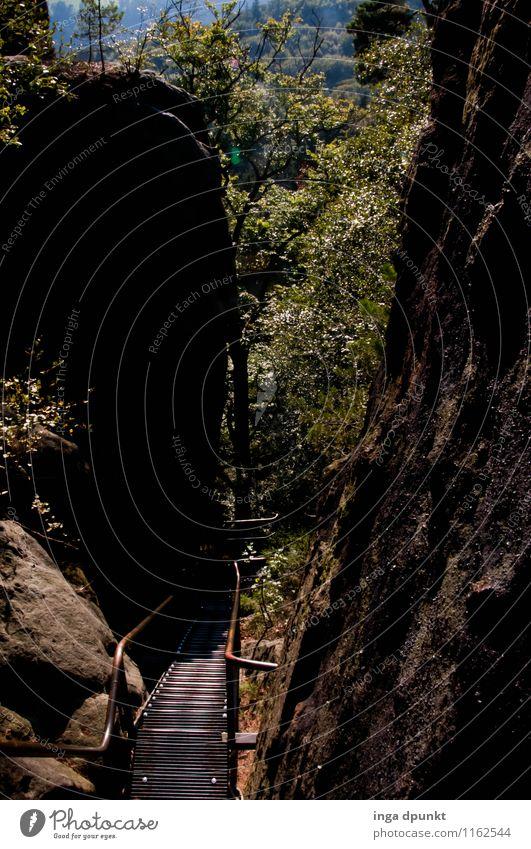 Schluchtweg Umwelt Natur Landschaft Pflanze Schönes Wetter Baum Wald Felsen Berge u. Gebirge Tal Felsspalten Gesteinsformationen Sachsen Sächsische Schweiz