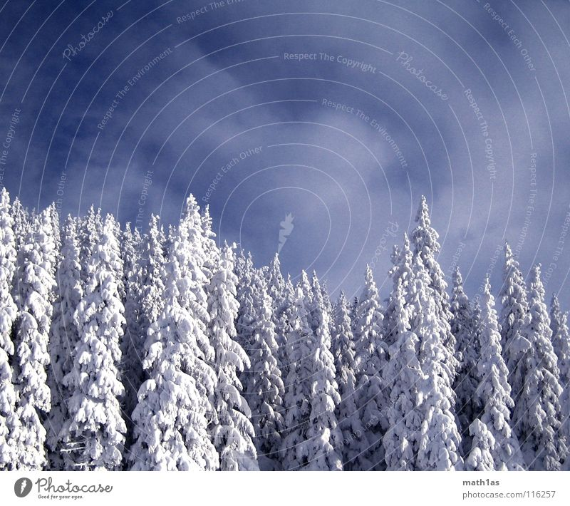 Winterwald Wald Baum Holzmehl Himmel Schnee tree snow wonder blue white dark contrast trees forest clouds sky heaven cold coldblue darkblue