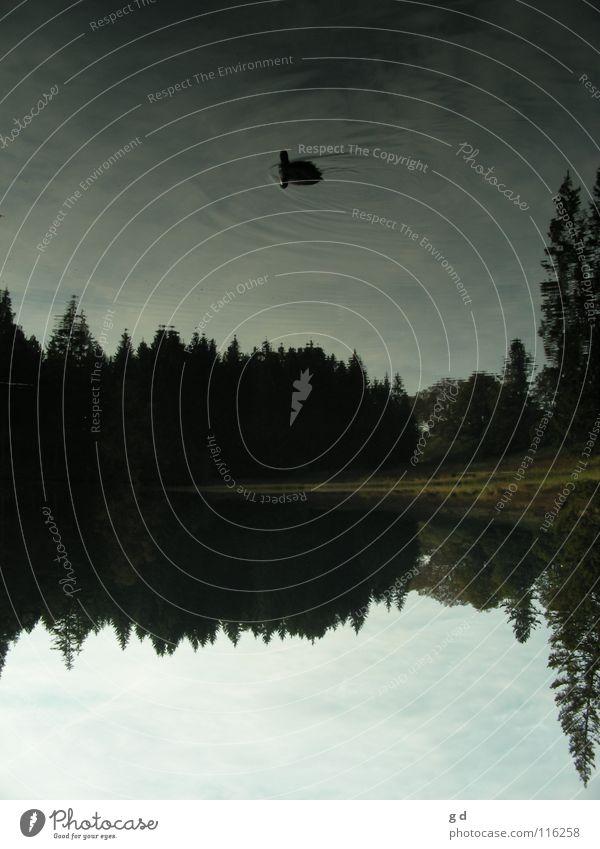 The almighty duck that is swimming in the sky Wald Baum Tanne Reflexion & Spiegelung Gras Wolken grün verkehrt Herbst Ente Himmel Wasser blau Duck