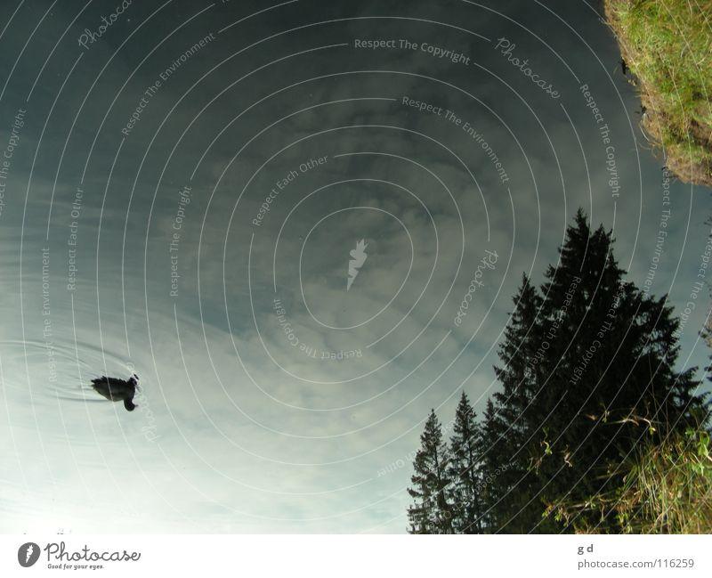 The Hitchhikers Guide to the Sky Wald Baum Tanne Reflexion & Spiegelung Gras Wolken grün verkehrt Anhalter Wellen Herbst Ente Himmel Wasser blau Duck