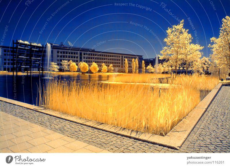Umwelt Zone Infrarotaufnahme Farbinfrarot Horizont gelb See Baum Schilfrohr Zukunft Sommer Wasserfontäne Langzeitbelichtung Himmel blau gestellt Messesee