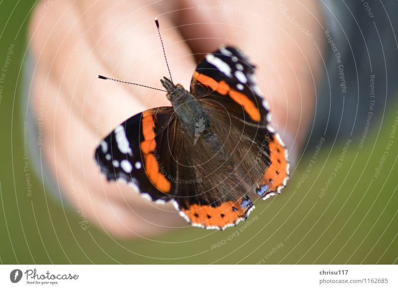 Die Schönheit auf der Hand Natur Garten Tier Wildtier Schmetterling Flügel 1 blau braun rot schwarz weiß Akzeptanz schön ruhig Respekt elegant Lebensfreude