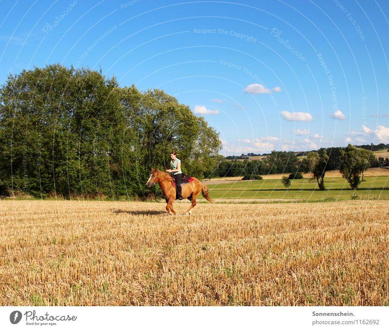 Das Glück dieser Erde ... Himmel Natur blau grün Landschaft Freude Tier Leben Bewegung feminin Freiheit Zusammensein Zufriedenheit Kraft Fröhlichkeit