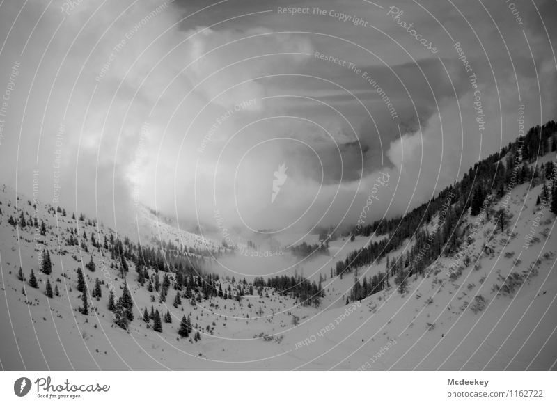 snow valley Umwelt Natur Landschaft Pflanze Himmel Wolken Sonne Winter Wetter Nebel Eis Frost Schnee Schneefall Baum Gras Sträucher Grünpflanze Wildpflanze